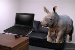 School Laptops Get Destroyed By Adopted Rhino